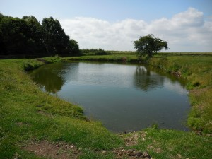 Burstwick castle fishpond East Yorkshire, 2015